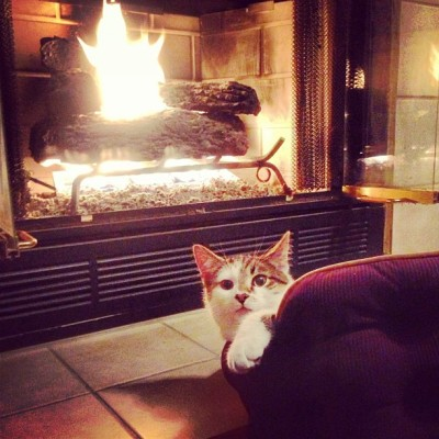 Louie Tatum basks in front of a winter fire.